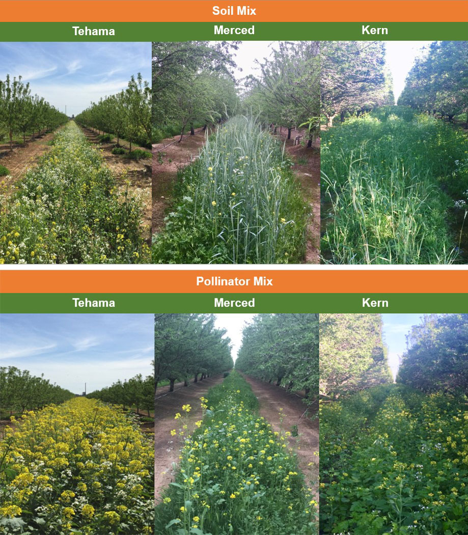 Soil mix and pollinator mix cover crop trials in almond orchards