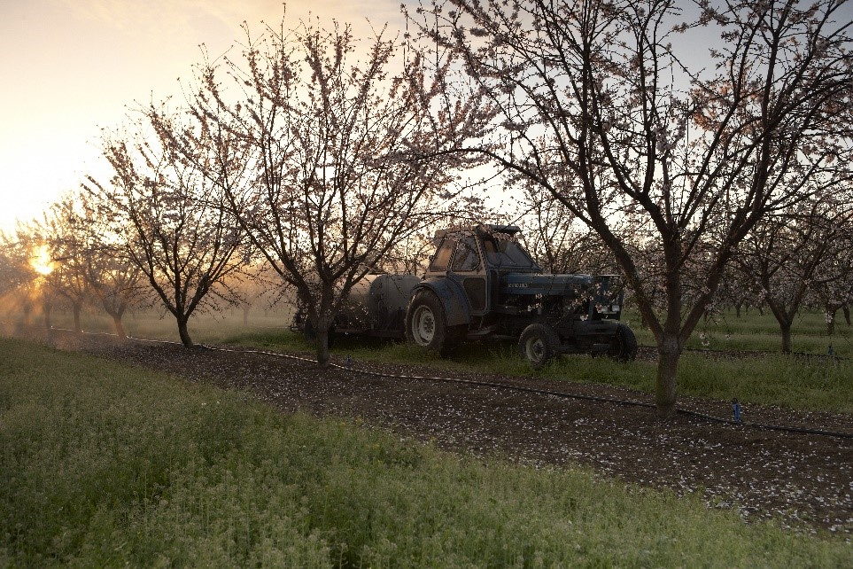 Spray rig in an almond orchard