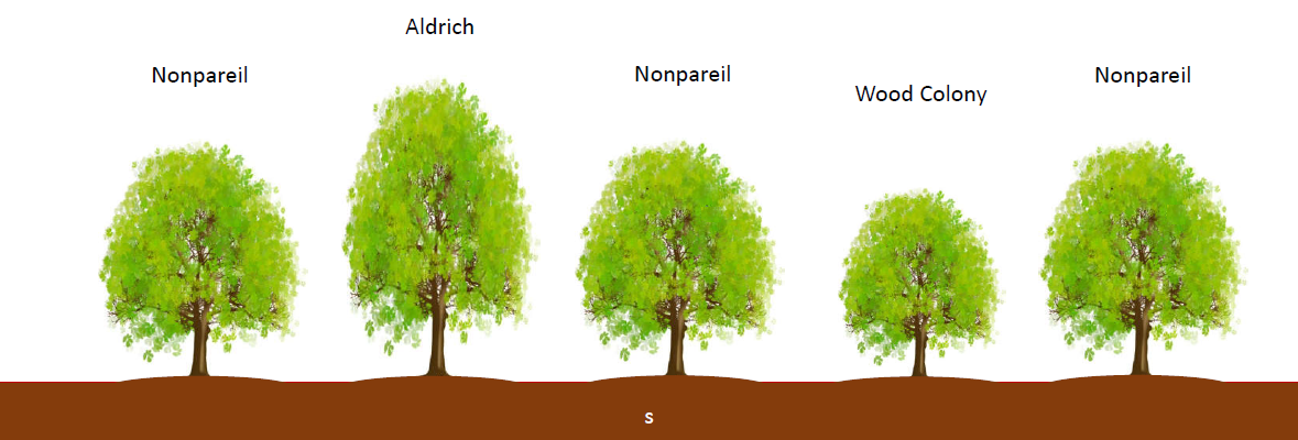 Varieties of Almond Trees